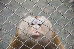 Macaco na gaiola Fotografia de Stock Royalty Free