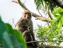 Macaco nella giungla Immagini Stock Libere da Diritti