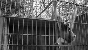Macaco no jardim zoológico Fotos de Stock