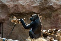 Macaco no jardim zool?gico fotos de stock
