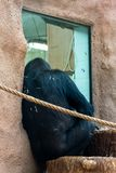 Macaco no jardim zool?gico imagem de stock royalty free