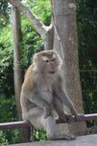 Macaco no parque nacional, Tailândia Fotos de Stock