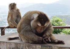 Macaco no parque nacional, Tailândia Imagem de Stock