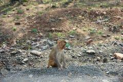 Macaco nos pensamentos Foto de Stock Royalty Free
