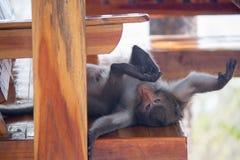 Macaco novo engraçado Foto de Stock Royalty Free