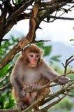 Macaco novo na árvore Imagem de Stock Royalty Free