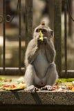 Macaco pequeno fotografia de stock royalty free