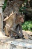Macaco pequeno bonito Foto de Stock Royalty Free