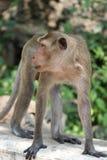 Macaco pequeno bonito Fotografia de Stock Royalty Free
