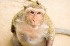 Macaco pequeno bonito imagens de stock