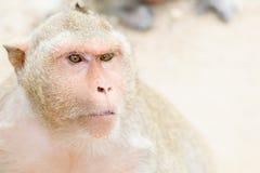 Macaco pequeno bonito 2 foto de stock royalty free