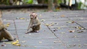 Macaco pequeno bonito Toque de inquietação Cub de um macaco vídeos de arquivo