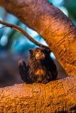 Macaco pequeno em uma árvore foto de stock royalty free