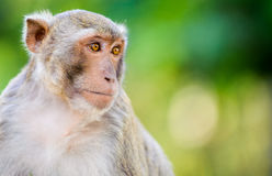 Macaco pequeno que procura algo fotos de stock royalty free