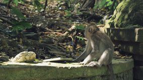 Macaco pequeno que senta-se na parede de pedra filme
