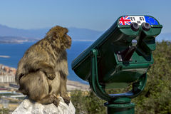 Macaco perto do telescópio Fotografia de Stock Royalty Free