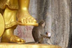 Macaco por uma estátua chinesa dourada do deus imagens de stock royalty free