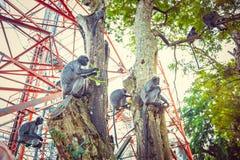 Macaco prateado da folha Família de langurs prateados Imagem de Stock Royalty Free