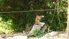 Macaco que bebe da garrafa vídeos de arquivo