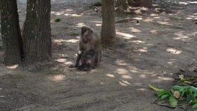 Macaco que come a fruta Nenhum som vídeos de arquivo