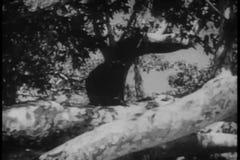 Macaco que corre através da selva video estoque