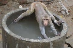 Macaco que faz a ioga da água foto de stock