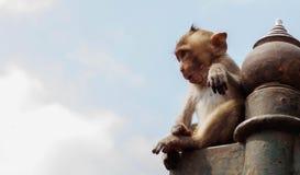 Macaco que senta-se com céu azul fotografia de stock royalty free