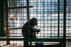 Macaco que senta-se na gaiola Foto de Stock Royalty Free