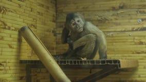Macaco riscado no jardim zoológico filme