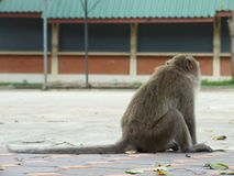 Macaco só fotos de stock