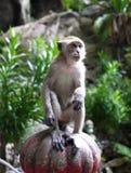 Macaco selvagem imagem de stock