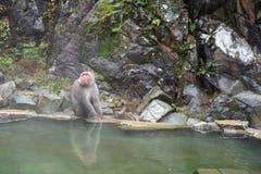 Macaco selvagem da cara vermelha no parque do macaco de Jigokudani em Yamanouchi, Na fotos de stock