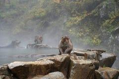 Macaco selvagem da cara vermelha no parque do macaco de Jigokudani em Yamanouchi, Na foto de stock