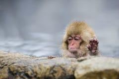 Macaco selvagem da neve do bebê que diz o ` bastante! ` imagem de stock royalty free