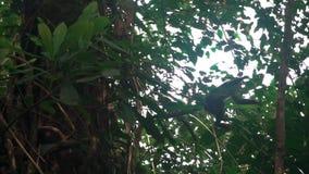Macaco selvagem que salta entre árvores no lento-movimento video estoque