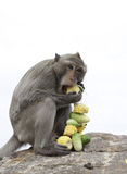 Macaco tailandês Fotografia de Stock Royalty Free