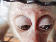 Macaco triste Fotografia de Stock Royalty Free
