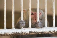 Macaco triste atrás das barras imagem de stock