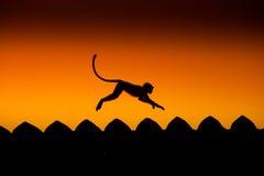 Macaco urbano Fotografia de Stock Royalty Free