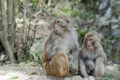Macacos imagens de stock royalty free