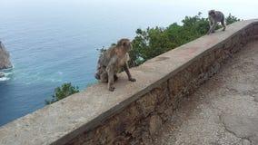 macacos Foto de Stock Royalty Free