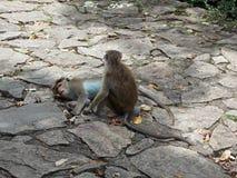 Macacos agradáveis fotografia de stock