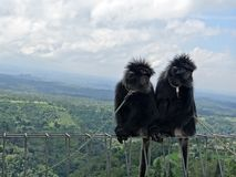Macacos bonitos contra o fundo da paisagem de Bali Imagens de Stock Royalty Free