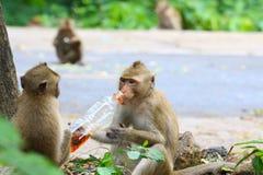 Macacos bonitos, macaco engraçado Imagens de Stock Royalty Free