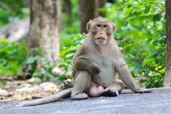 Macacos bonitos, macaco engraçado Foto de Stock Royalty Free