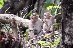Macacos curiosos foto de stock royalty free