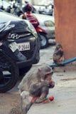 Macacos da cidade imagem de stock royalty free