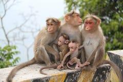 Macacos de inquietação imagens de stock royalty free