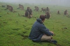 Macacos de observação Imagens de Stock Royalty Free