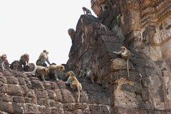 Macacos de Phra Prang Sam Yod fotografia de stock royalty free